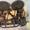 Гантели , штанга ,  диски #990006